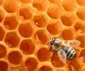 Les abeilles à l'honneur