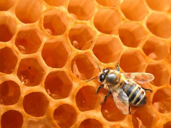 abeille_ruche