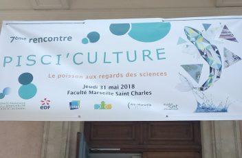 'culture