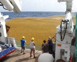 La découverte des bancs d'algues géants